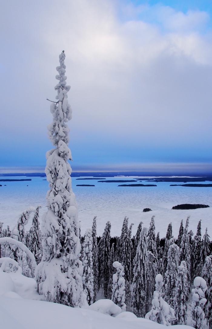 Lumikenkäretki Kolilla