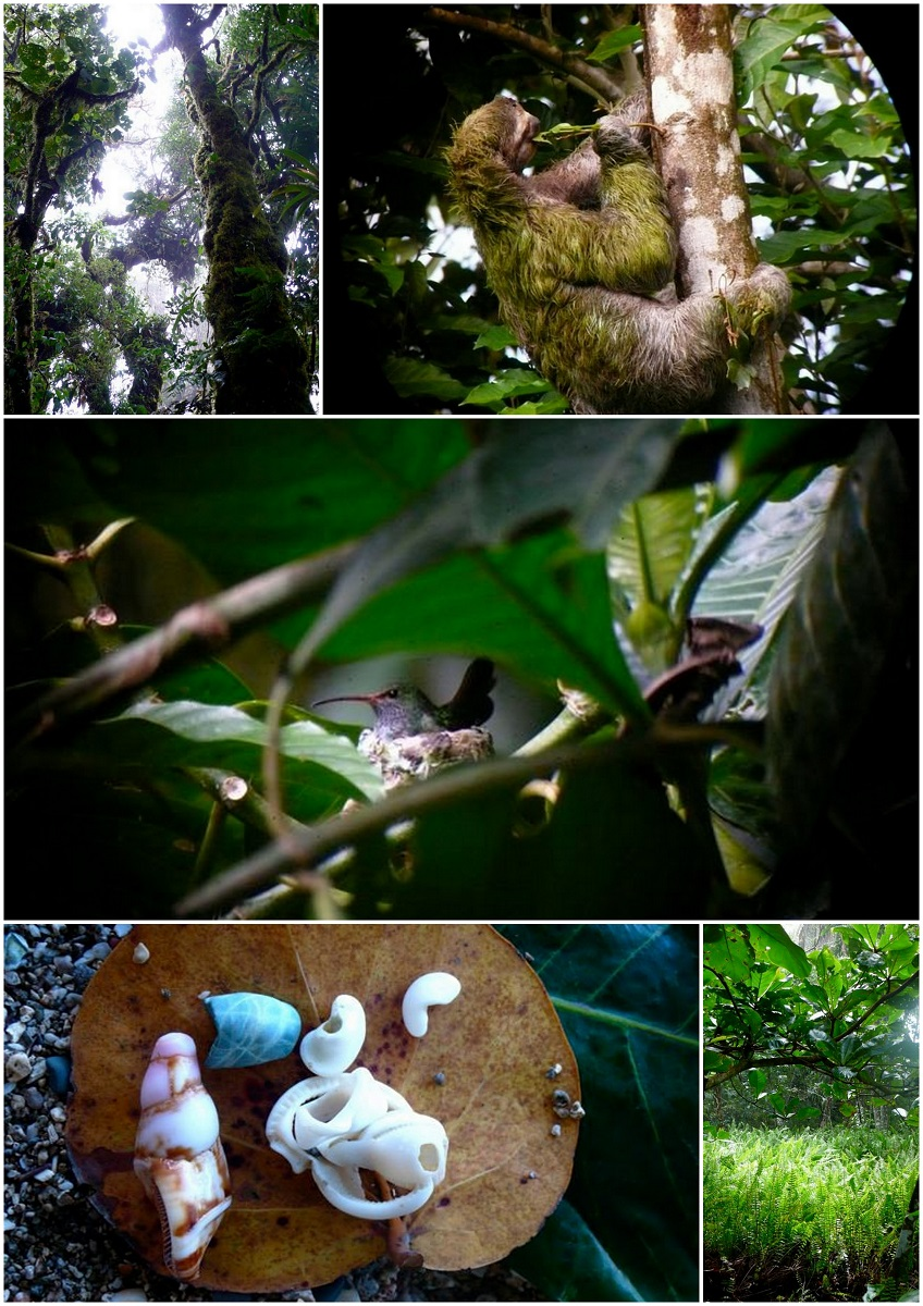 Costa Rican luontoa