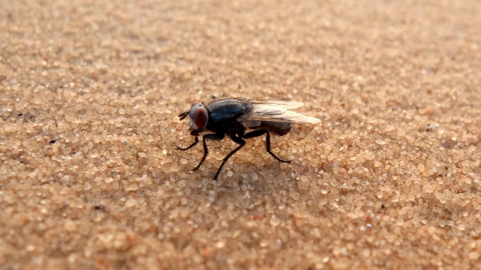Sekä Egypti että hyönteiset saivat tutkimuksessa moitteita. Kuva: Flickr/Jesper Särnesjö.