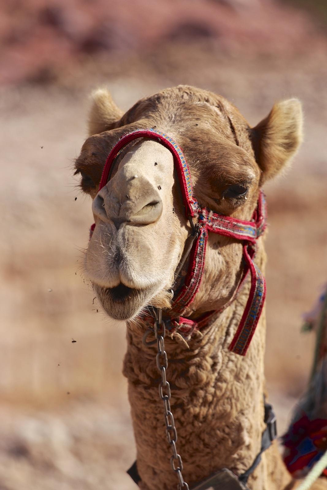 Jordania Wadi Rum