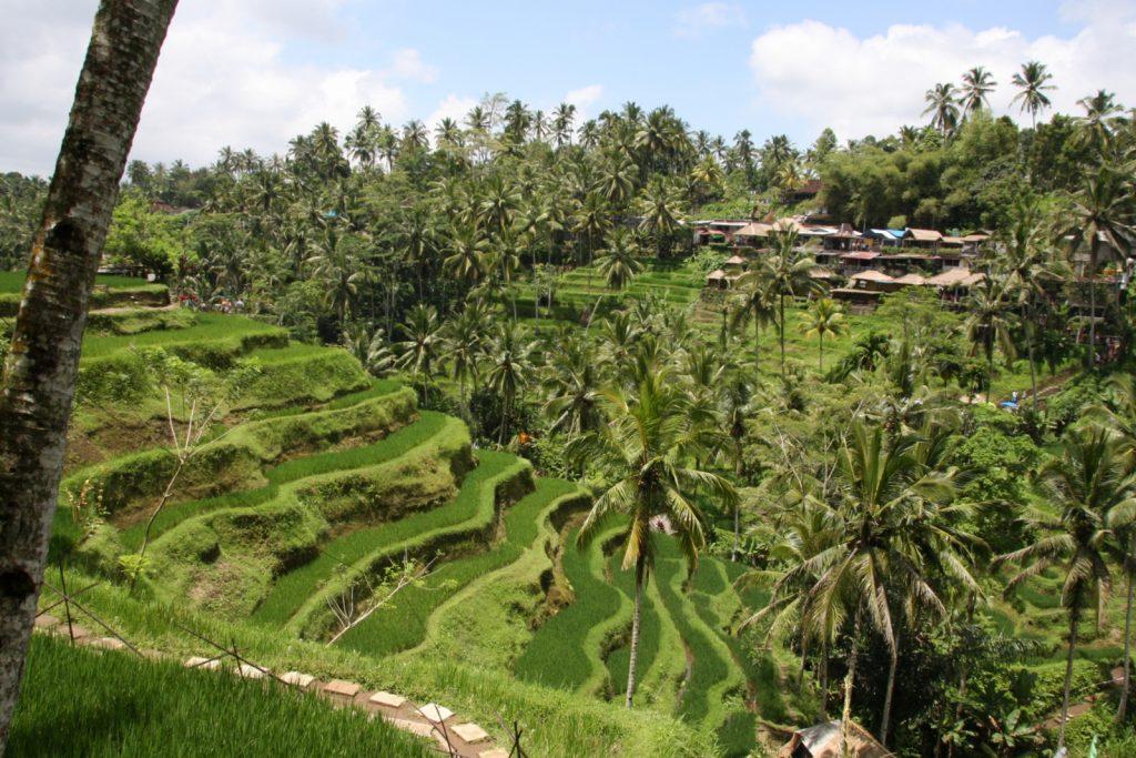 Balin nähtävyydet - Tegallalang