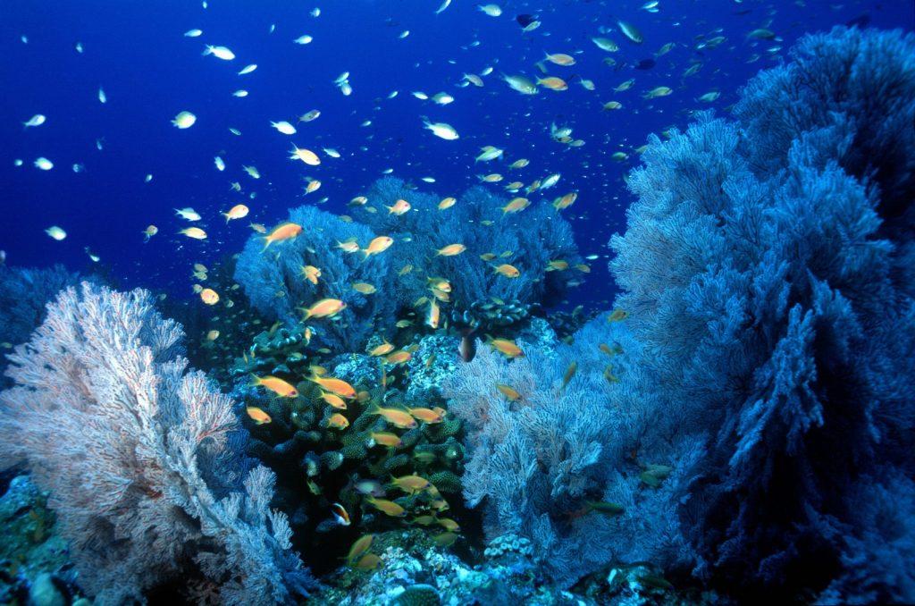 Muovijäte merissä - Thaimaa puhdistaa meriä. Merenalaista maailmaa Tachain saaren edustalla (Mu Ko Similan, Phanga-Nga). Kuva © Tourism Authority of Thailand.