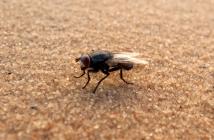Sekä Egypti että hyönteiset saivat tutkimuksessa moitteita. Kuva: Flickr/Jesper Särnesjö