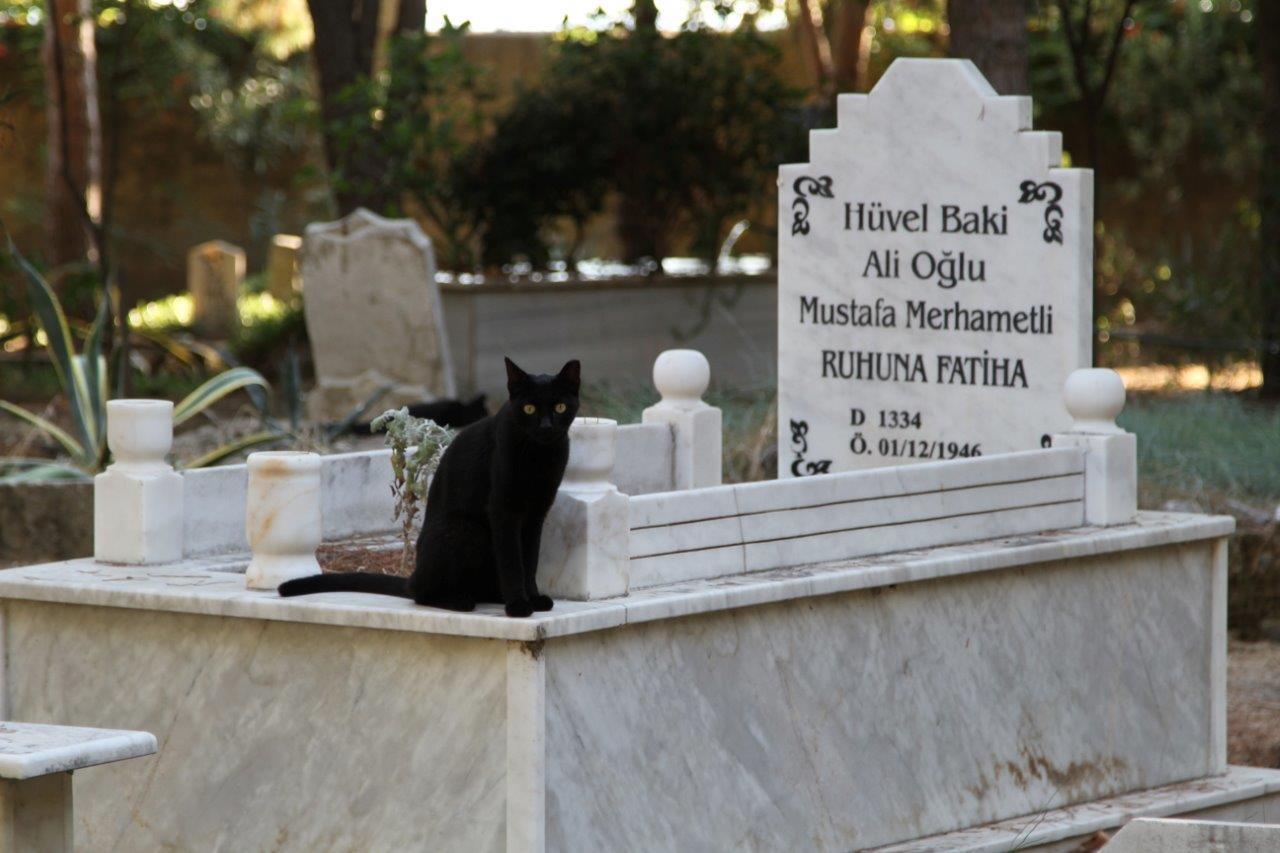 turkki-alanya-kissat