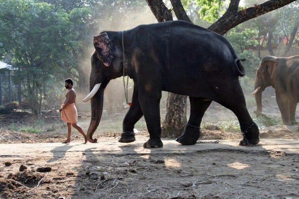 Temppelin varjossa - valokuvia Intiasta. Elefanttihoitolassa. Kuva © Päivi Arvonen.