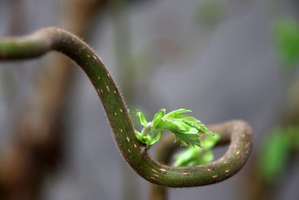 Viherpaja, japanilainen puutarha Vantaalla