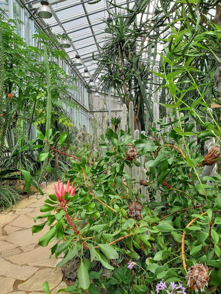 Tallinnan kasvitieteellinen puutarha