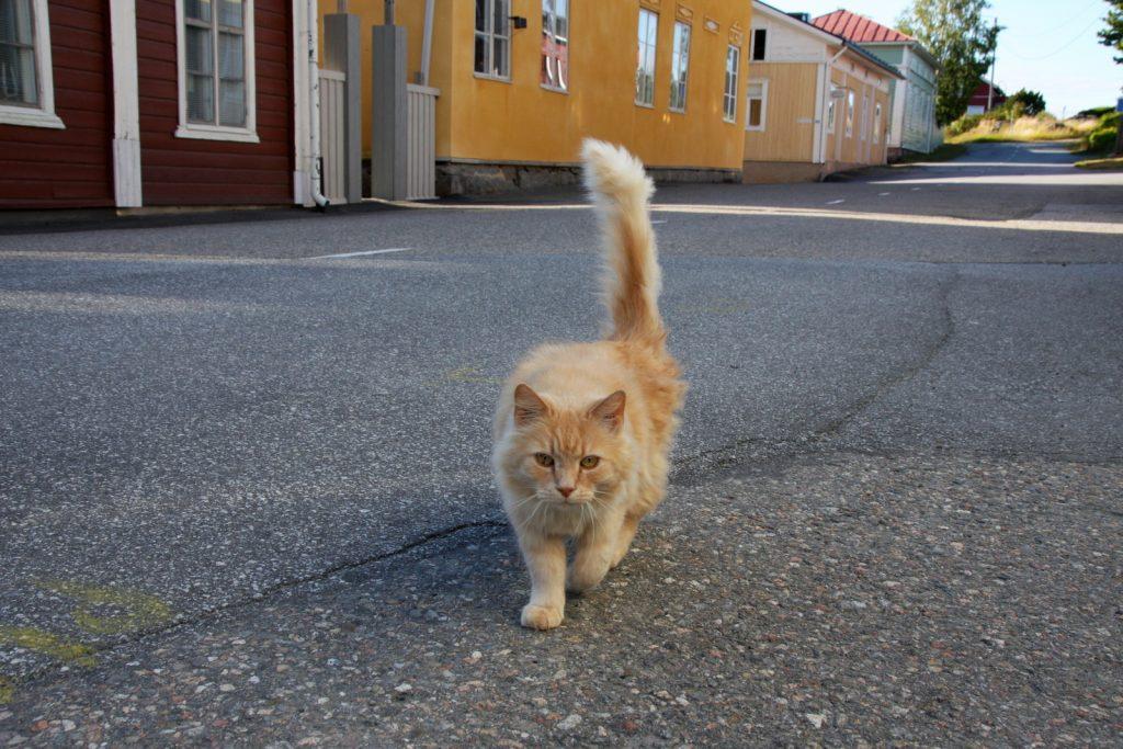 Kristiinankaupunki, kissat