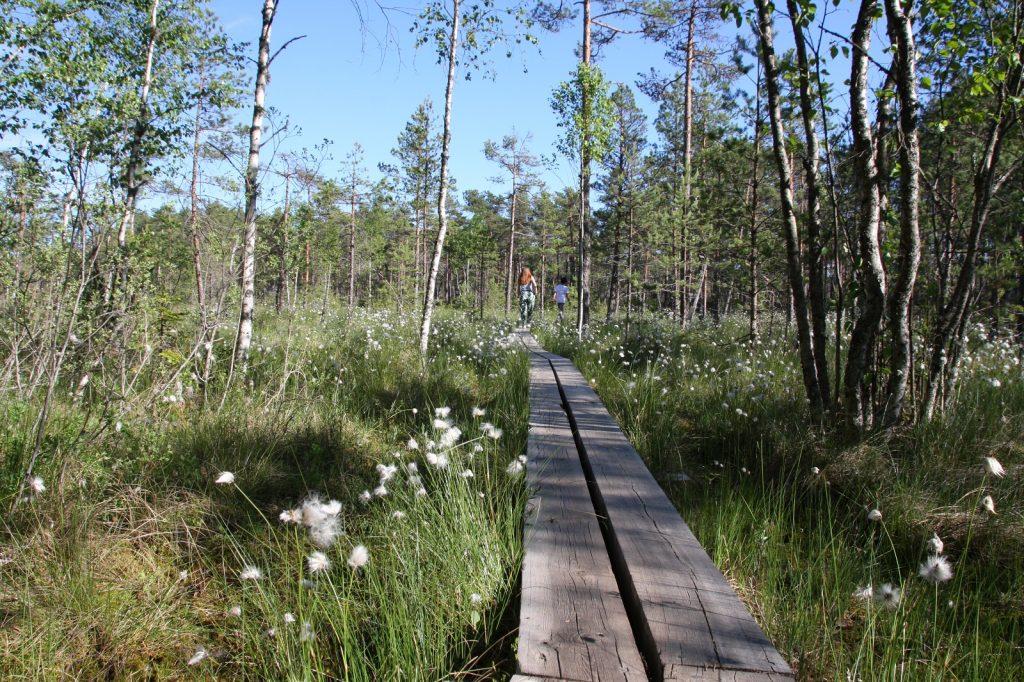 Valkmusan kansallispuisto.